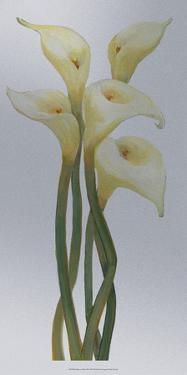 Callas on Silver II by Tim O'toole