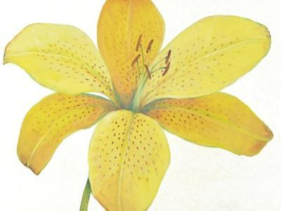 Citron Tiger Lily II by Tim O'toole