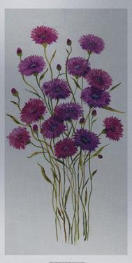 Cornflower Patch II by Tim O'toole