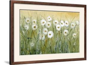 Daisy Spring I by Tim O'toole