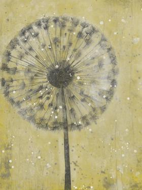 Dandelion Abstract II by Tim O'toole