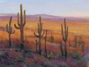 Desert Light I by Tim O'toole