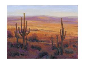 Desert Light II by Tim O'toole