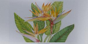 Exotic Flowers II by Tim O'toole