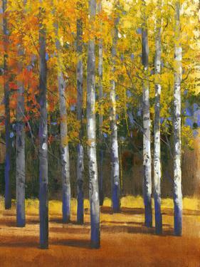 Fall in Glory I by Tim O'toole