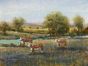 Field of Cattle II by Tim O'toole
