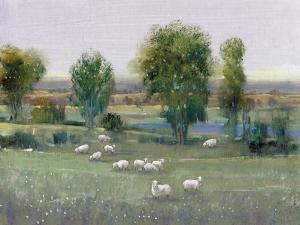 Field of Sheep I by Tim O'toole