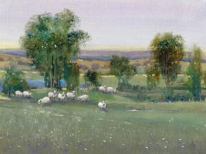 Field of Sheep II by Tim O'toole
