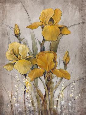 Golden Irises II by Tim O'toole