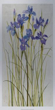 Iris Patch I by Tim O'toole