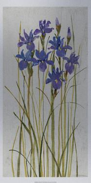 Iris Patch II by Tim O'toole