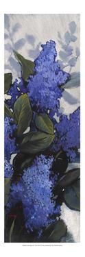 Lilac Spray II by Tim O'toole