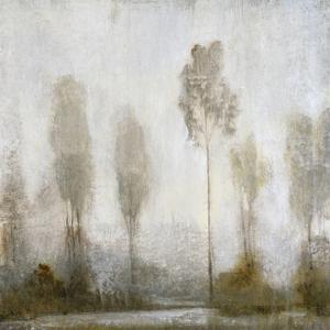 Misty Marsh II by Tim O'toole