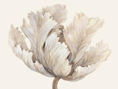Monochromatic Tulip I by Tim O'toole