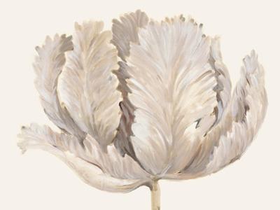 Monochromatic Tulip II by Tim O'toole