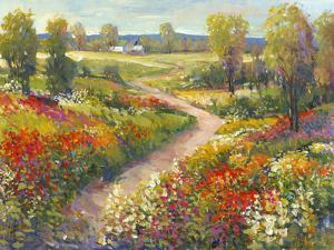 Morning Walk II by Tim O'toole
