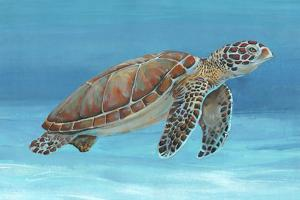 Ocean Sea Turtle I by Tim O'toole