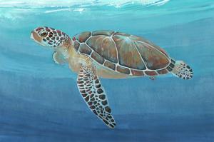 Ocean Sea Turtle II by Tim O'toole