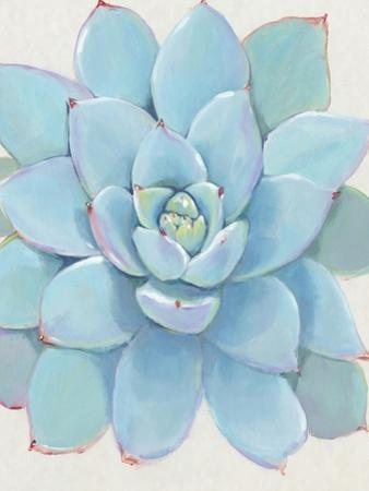 Pastel Succulent I by Tim O'toole