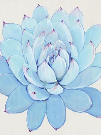 Pastel Succulent II by Tim O'toole