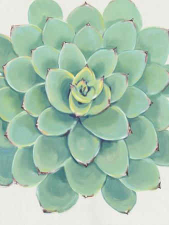 Pastel Succulent III by Tim O'toole
