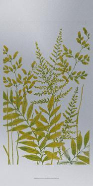 Pattern of Leaves I by Tim O'toole