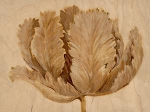 Sepia Tulip on Birch II by Tim O'toole