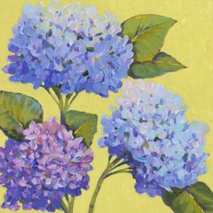 Spring Hydrangeas II by Tim O'toole