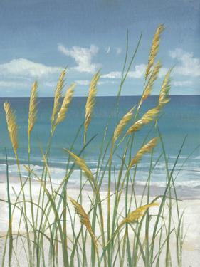Summer Breeze II by Tim O'toole