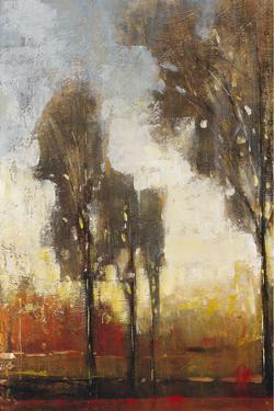 Tall Trees I by Tim O'toole