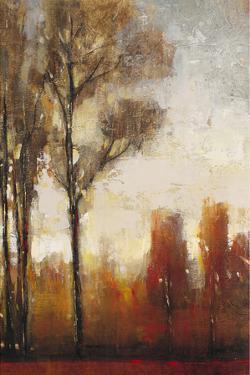 Tall Trees II by Tim O'toole