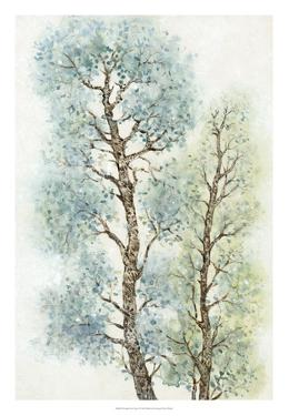 Tranquil Tree Tops I by Tim O'toole