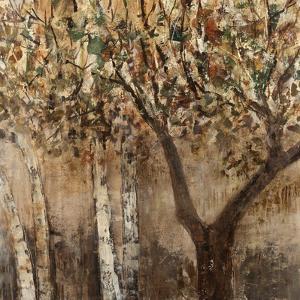 Tree Shade by Tim O'toole