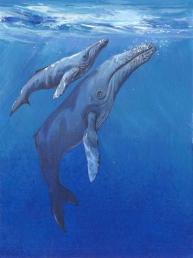 Under Sea Whales I by Tim O'toole