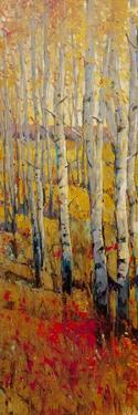 Vivid Birch Forest I by Tim O'toole