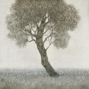 White Blossom Tree by Tim O'toole