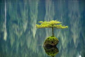 Fairy Lake Bonsai by Tim Oldford