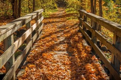 Fall on the Footbridge by Tim Oldford