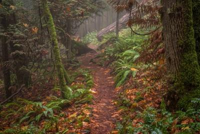 Forest Stroll by Tim Oldford