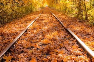 Train Tracks in the Fall by Tim Oldford
