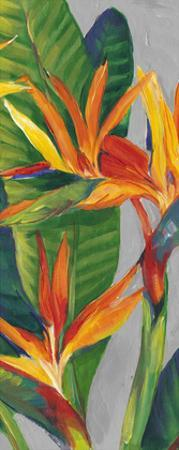 Bird of Paradise Triptych II by Tim OToole