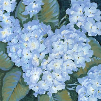 Blue Hydrangeas II by Tim OToole