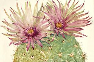 Cactus Blossoms I by Tim OToole