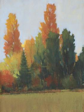 Fall Colors I by Tim OToole
