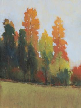 Fall Colors II by Tim OToole