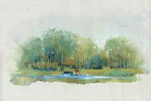 Forest Vignette II by Tim OToole