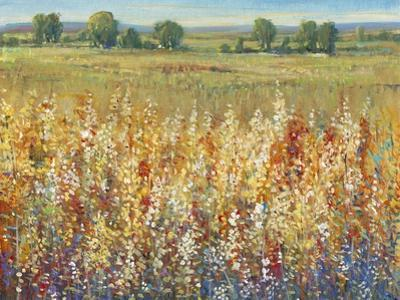 Gold and Red Field I by Tim OToole