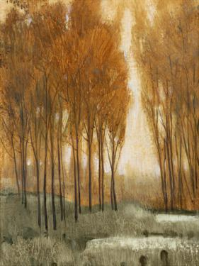 Golden Forest II by Tim OToole