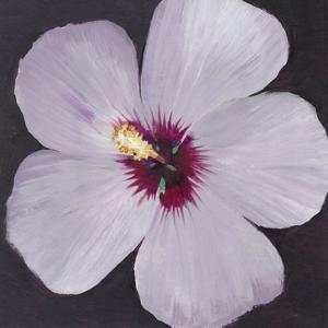 Hibiscus Portrait I by Tim OToole