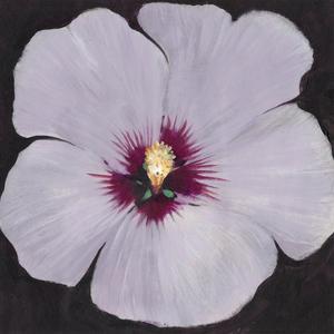Hibiscus Portrait II by Tim OToole